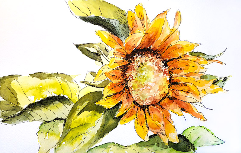 laurie - sunflower